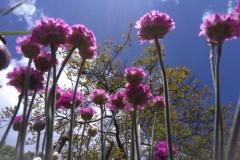 Blumen am Sandarium von unten in den Himmel