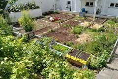 Gemeinschaftsgarten-Tomorrow-Kleinostheim-4